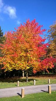 Autumn, Leaves, Essex, Tree, Sky, Blue, Red, Yellow