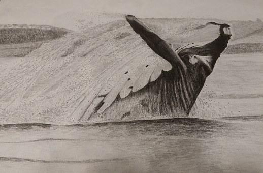 Art, Sketch, Sketching, Draw, Drawing, Whale