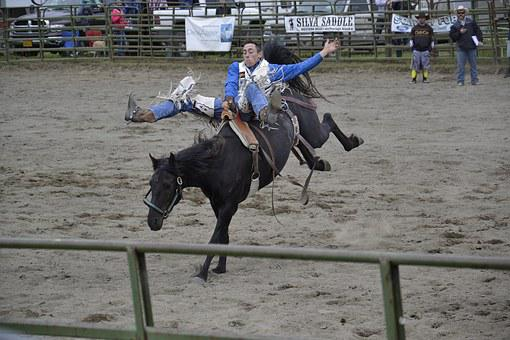 Rodeo, Horse, Alaska, Cowboy, Equestrian, Animal, Arena