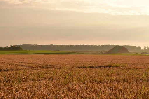 Morgenstimmung, Field, Cornfield, Haze, Landscape