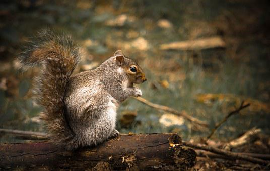Squirrel, Woods, Forrest, Animal, Forest, Nature