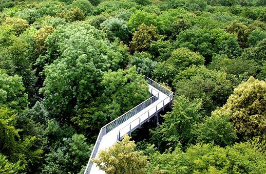 Forest, Ways Tops, Green, Treetop Path, Treetop Walking