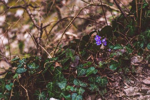 Nature, Wood, Forrest