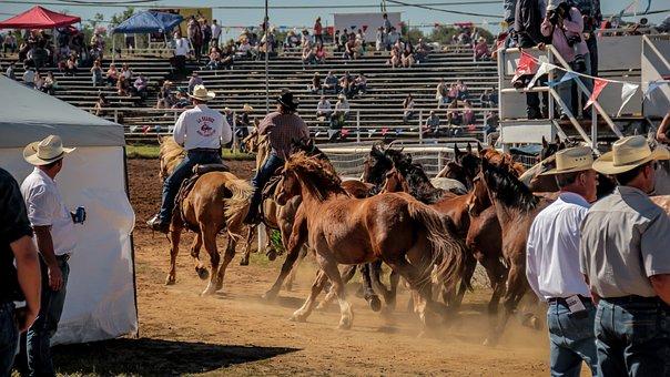 Rodeo, Horse, Cowboy, Western, Rider, Animal, Equine