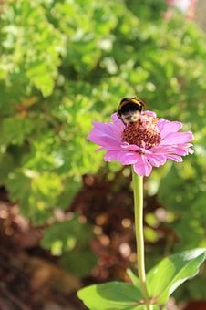 Insect, Mangangá, Flower, Green, Bumble Bee