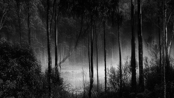 Forest, Fog, Misty, Camping Ground