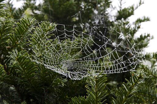 Cobweb, Web, Spider Web, Nature, Spiderweb, Morning