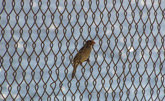 Bird, Fence, Freedom, Slavery, Barrier, Obstacle