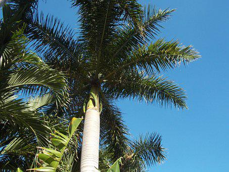 Palm, Palm Branches, Date Palm, Fronds, Florida