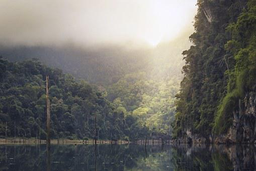 Lake, Rain Forest, Tropical, Reflection, Trees, Nature