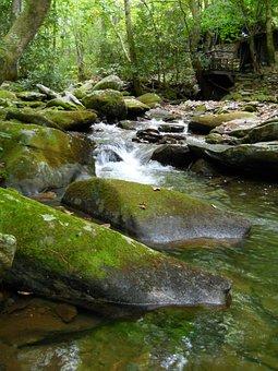 Water, River, Rocks, Creek, Flowing, Moss, Forrest