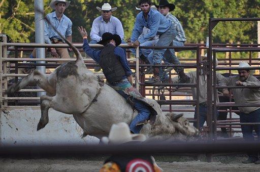 Rodeo, Ranch, Bucking, Cowboy, Western, Texas, Rope