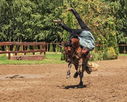 Rider, Horse, Horse Riding, Tradition, Rodeo, Gallop