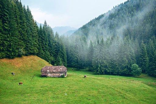 Mountains, Morning, Misty, Scenic, Fog, Natural, Season