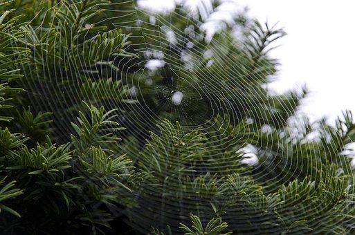 Cobweb, Web, Spider Web, Nature, Spiderweb, Morning