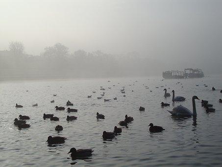 Water, Nature, Landscape, Birds, Boat, The Fog