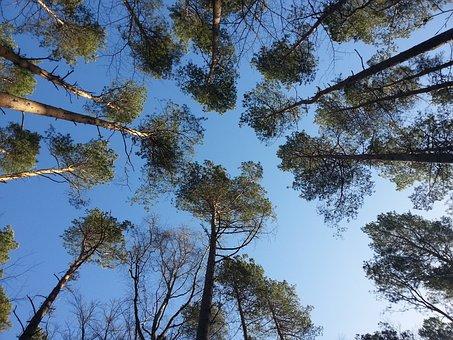Fischland Darß, Treetop, Trees