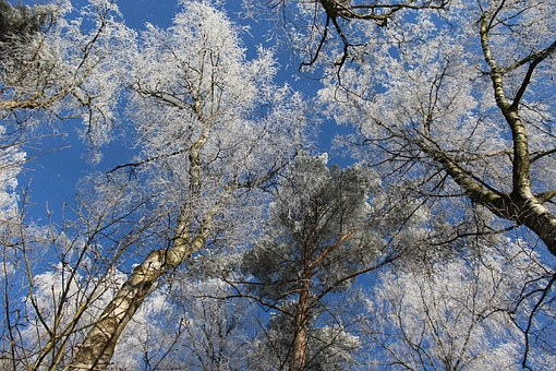 Winter, Winter Forest, Forest, Winter Magic, Treetop
