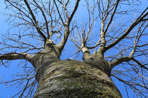 Tree, Winter, Sky, Landscape, Cold, Nature, Season