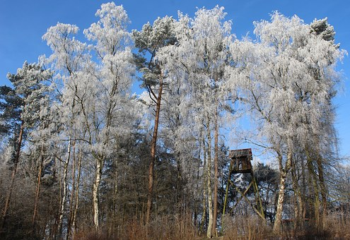 Winter, Winter Forest, Winter Magic, Treetop, Treehouse