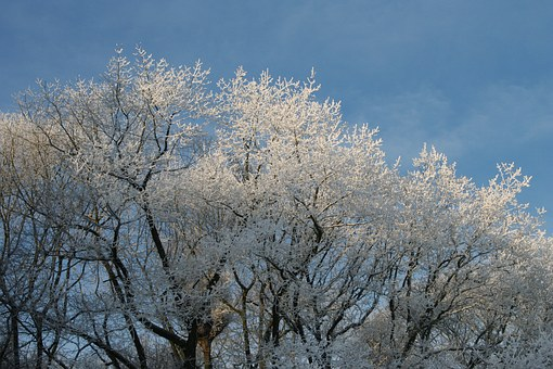 Frozen Treetops, Winter, Winter Trees Steel Blue Sky