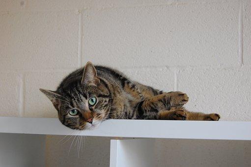 Cat, Animal, Feline, Cute, Look, Tabby