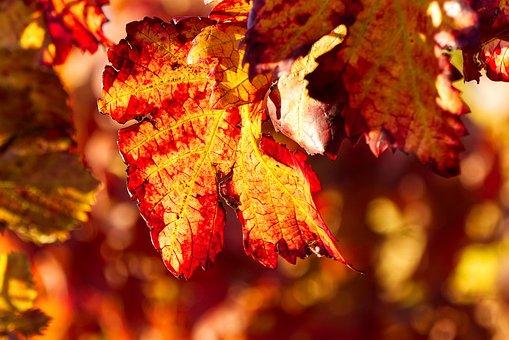 Leaf, Leaves, Red, Autumn Color, Nature, Autumn