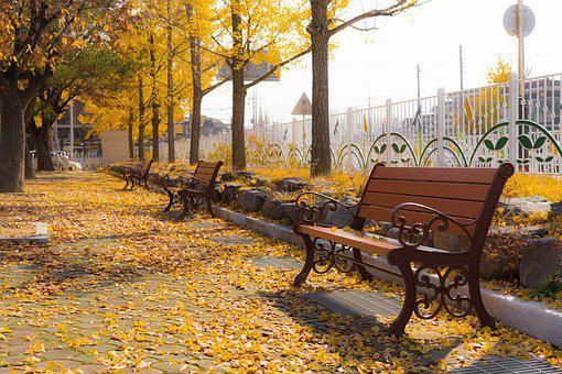 Autumn, Ginkgo, Bench, Free, Yellow, Autumn Leaves