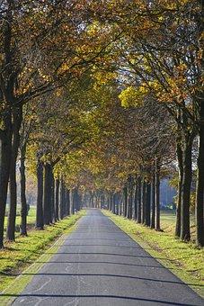 Avenue, Trees, Road, Away, Nature, Autumn, Mood
