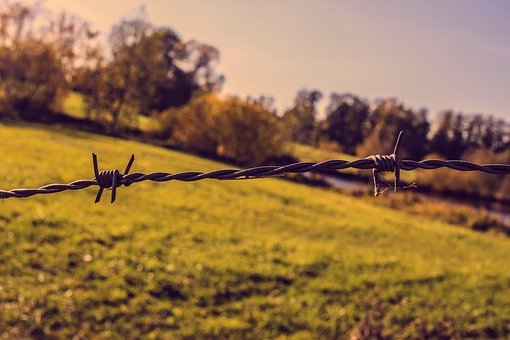 Pasture Fence, Metal, Wire, Barbed Wire, Fencing