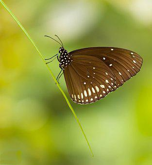Butterfly, Green, Colorful, Beautiful, Wings, Bug
