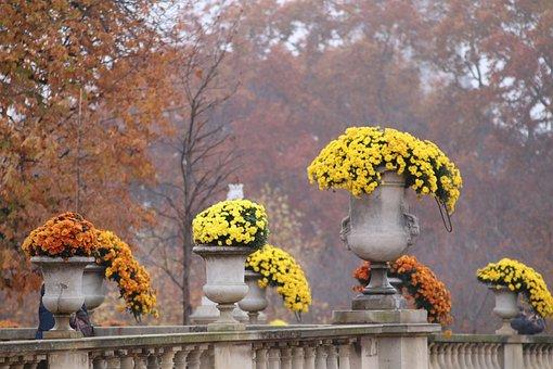 Mums, Flower Pots Stone, Plants, Beauty, Flowers