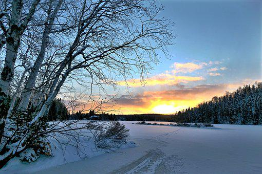 Sunset, Nature, Winter, Trees, Birch, Snow, Ice, Colors