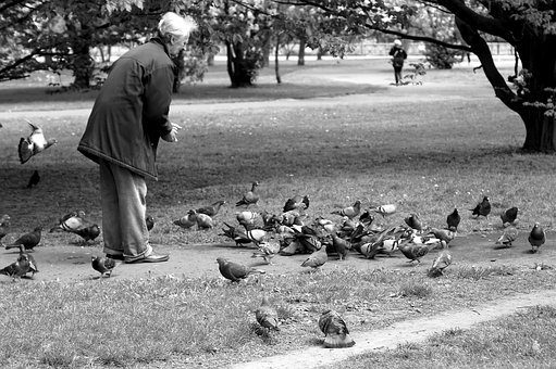 Pigeons, Park, The Old Man, Feeds, Black And White