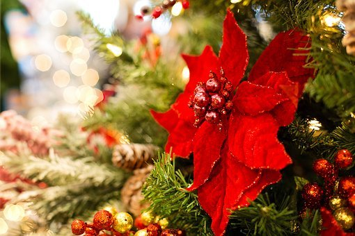 Christmas, Poinsettia, Christmas Tree, Decoration
