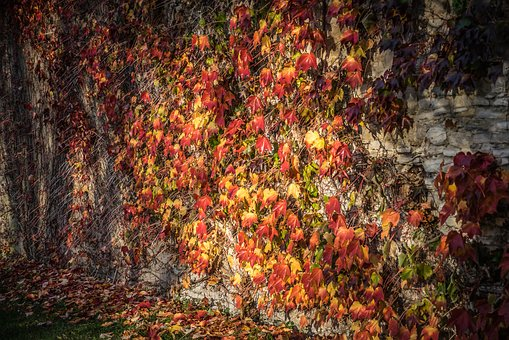 Colors, Light, Colorful, Abstract, Decorative, Autumn