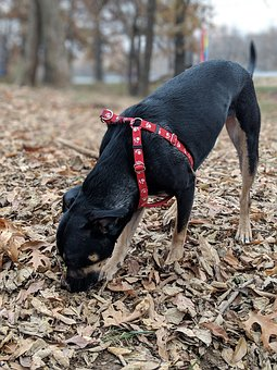 Dog, Canine, Black, Brown, Park, Rescue, Animal, Pet