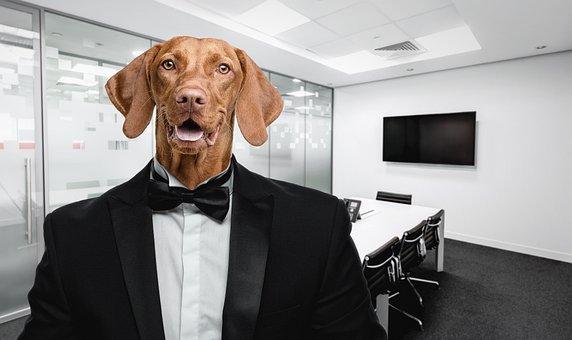 Dog, Suit, Office, Selfie, Beagle, Businessman