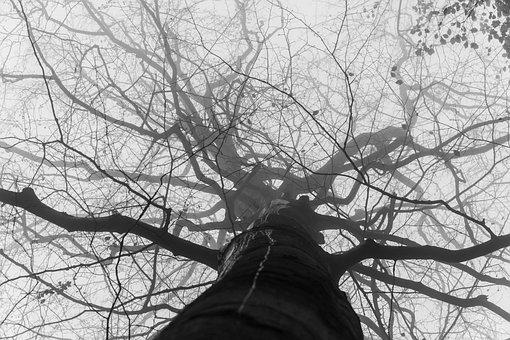 Forest, Tree, The Fog, Autumn, Foliage, Nature
