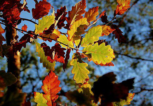 Foliage, Golden Polish Autumn, Tree, Forest