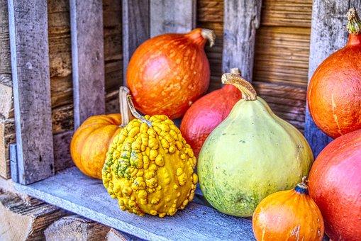 Pumpkin, Hokkaido, Food, Eat, Decoration, Wood