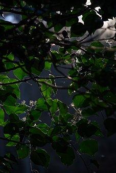 Backlighting, Green, Nature, Light, Landscape, Forest