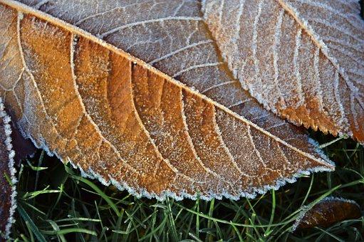 Hoarfrost, Frost, Ice, Eiskristalle, Leaves
