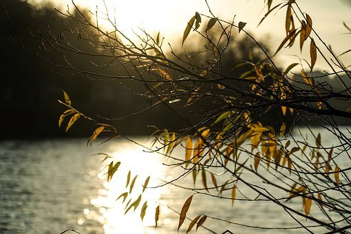 Autumn, Leaves, Branch, Sun, Golden, Shining, Sunset