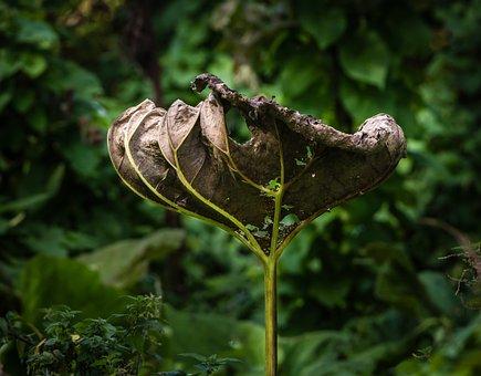 Flora, Flower, Head, Nature, Bloom, Dead
