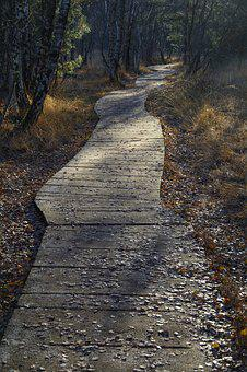 Boardwalk, Forest, Nature, Moor, Hike, Trail