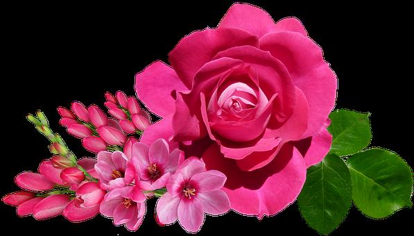 Rose Flowers, Pink, Ixia, Arrangement, Garden, Nature