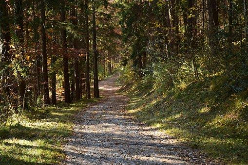 Forest, Autumn, Landscape, Nature, Forest Path