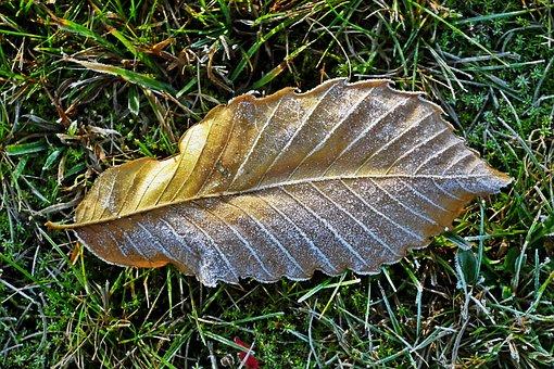 Leaf, Frost, Nature, Zmrożony, Closeup, Autumn, Grass