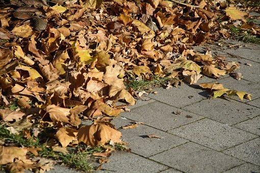 Leaves, Leaf Piles, Autumn, Fall Foliage, Fall Leaves